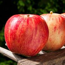 苹果的做法大全