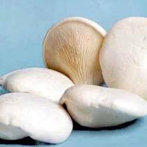 白灵菇的做法大全