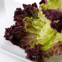 紫叶生菜的做法大全