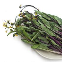 红菜苔的做法大全