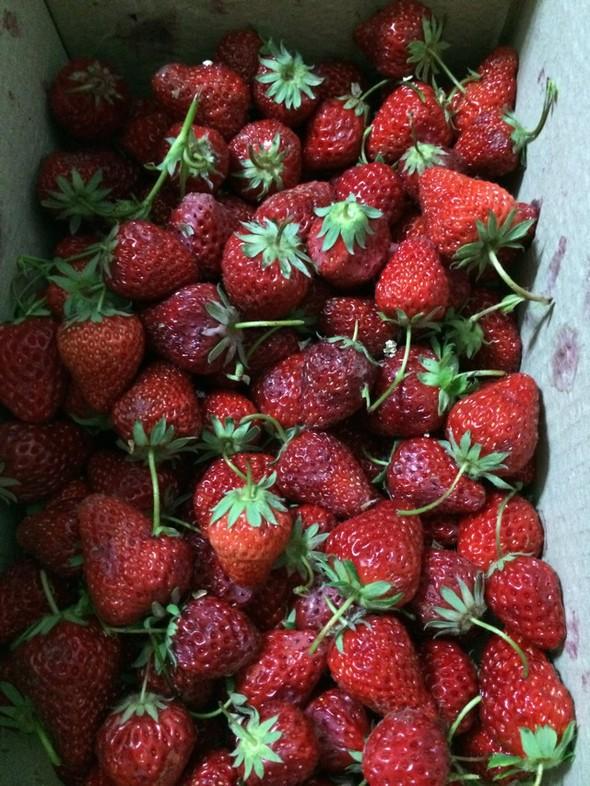 刚从县里摘来一箱草莓