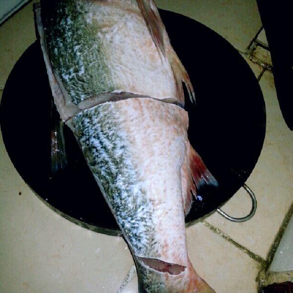 大鱼十二孔陶笛曲谱-一条大鱼临死前一幕,所有人吓傻了