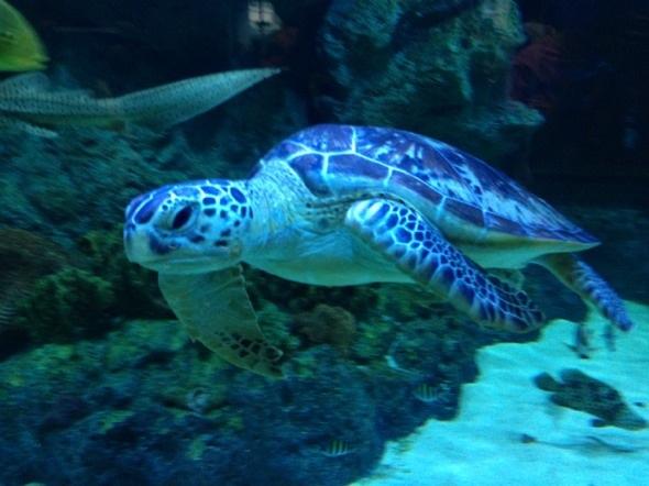 壁纸 海底 海底世界 海洋馆 水族馆 590_442
