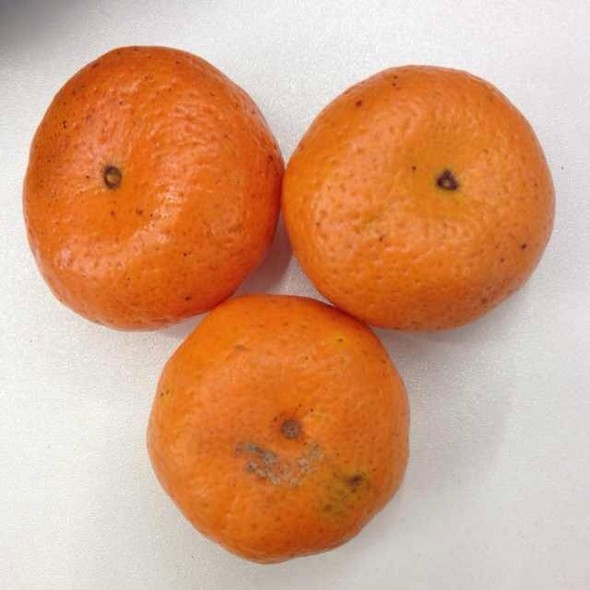 橘子粘土制作步骤图