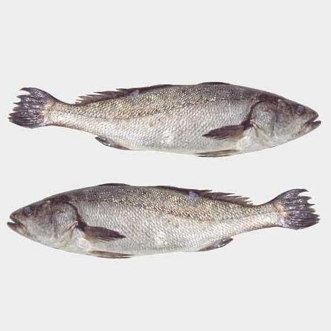 鮸鱼的做法大全