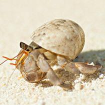沙蟹的做法大全