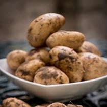 土豆的做法大全