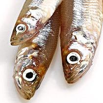 银鱼的做法大全