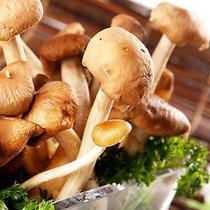 茶树菇的做法大全