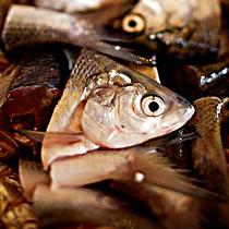鱼头的做法大全